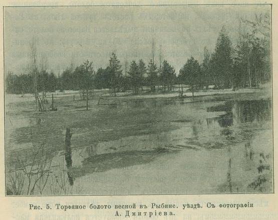Торфяное болото весной в Рыбинс. уезде
